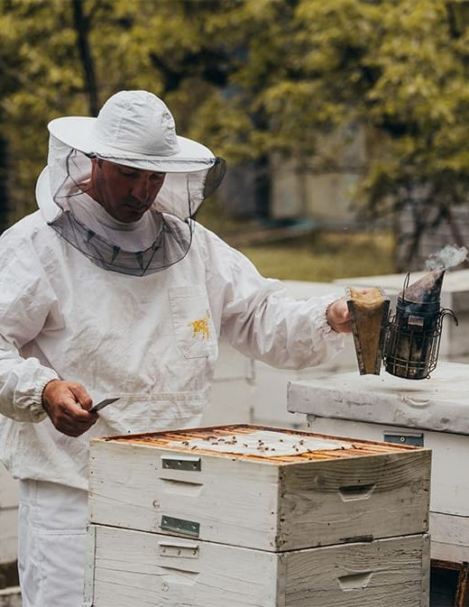 best bee keeper suit