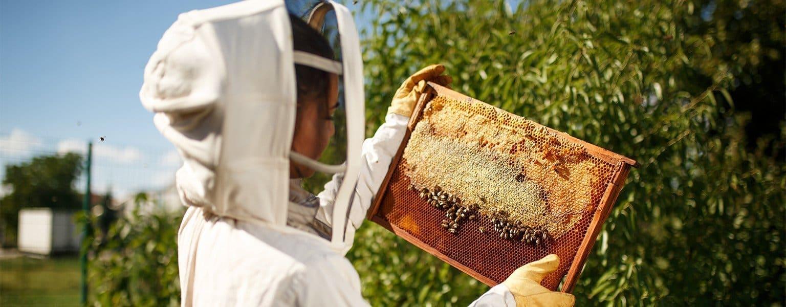 best bee suit