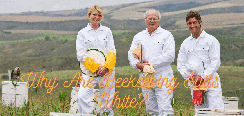 Why do beekeepers wear white suits